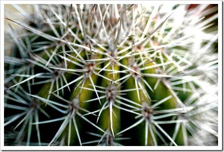 cactus-spines