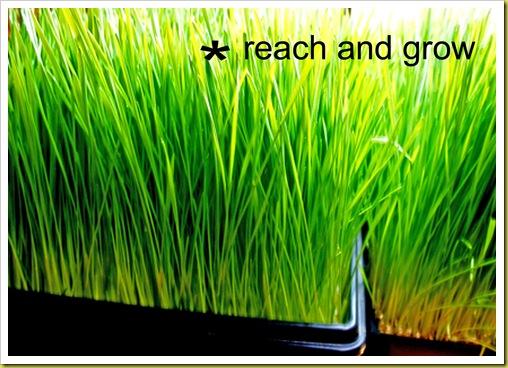 reach and grow
