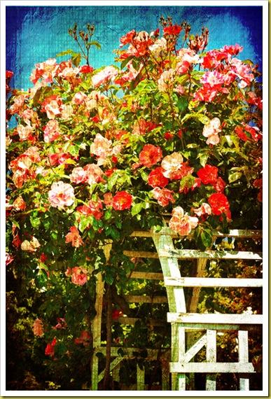 rose-trelis1