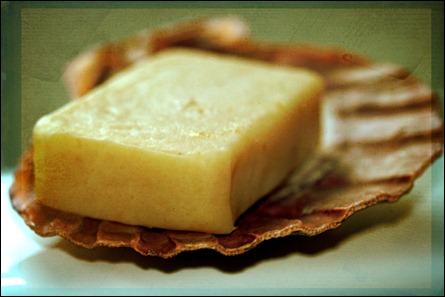 gecko-soap