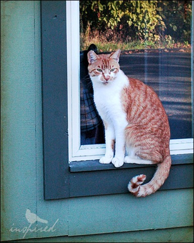 cat, window
