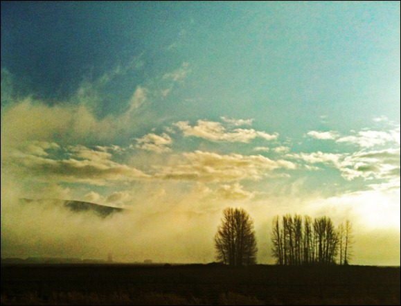fog-fraser-valley, bc