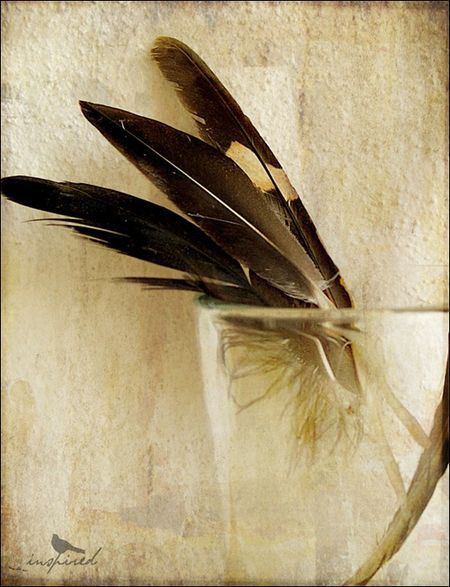 bird feathers san pancho