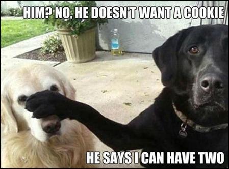 HaHa dogs